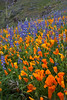 AZ-2010-084: Peachville Mountain, Pinal County, AZ, USA