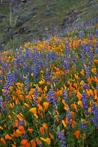 AZ-2010-083: Peachville Mountain, Pinal County, AZ, USA