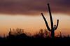 AZ-2009-026: Tucson, Pima County, AZ, USA