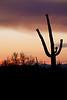 AZ-2009-025: Tucson, Pima County, AZ, USA