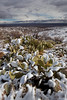 AZ-2011-053: Redington Pass, Pima County, AZ, USA