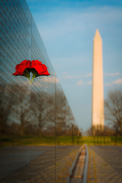 """""""A Rose in THE Wall"""" - Vietnam Memorial Wall, Washington, D.C.   Recommended Print sizes*:  4x6      8x12     12x18     16x24     20x30     24x36 *When ordering other sizes make sure to adjust the cropping at checkout*  © JP Diroll 2014"""