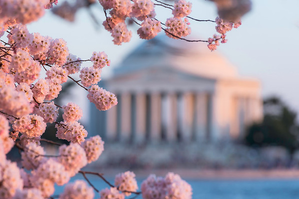 """A Flare for Blossoms"" - Jefferson Memorial, Washington, D.C.   Recommended Print sizes*:  4x6  