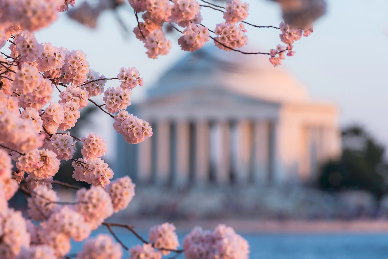 """""""A Flare for Blossoms"""" - Jefferson Memorial, Washington, D.C.   Recommended Print sizes*:  4x6      8x12     12x18     16x24     20x30     24x36 *When ordering other sizes make sure to adjust the cropping at checkout*  © JP Diroll 2014"""