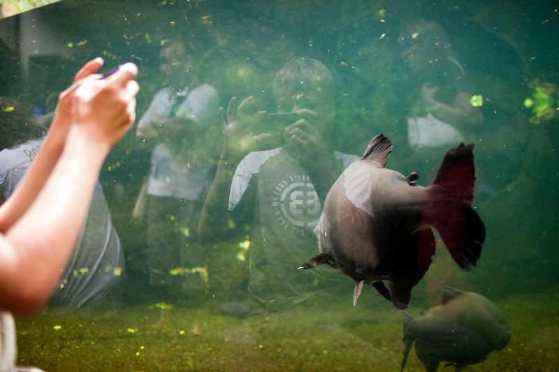 Child taking pictures of a fish, Berlin zoo, Germany
