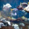 Aquarium, Berlin zoo, Germany