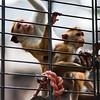 Little monkeys in a cage, Berlin zoo, Germany