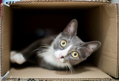 Cat inside a cardboard box