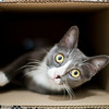 Cat inside a cardboard box