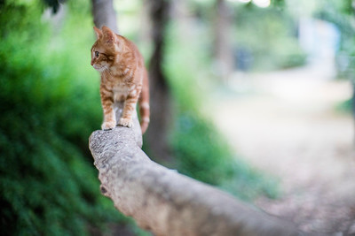 Young stray cat on a branch, Seville, Spain