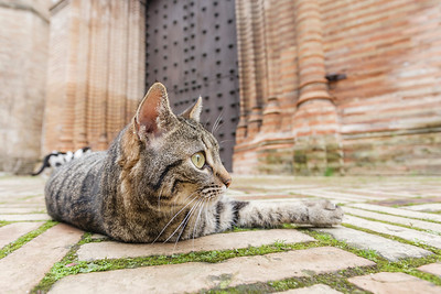 Kitty in front of the church of Santa Paula convent, Seville, Spain