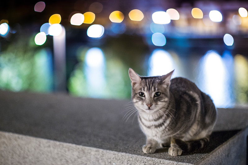 Stray cat by the river, Seville, Spain