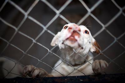Caged dog, Seville, Spain
