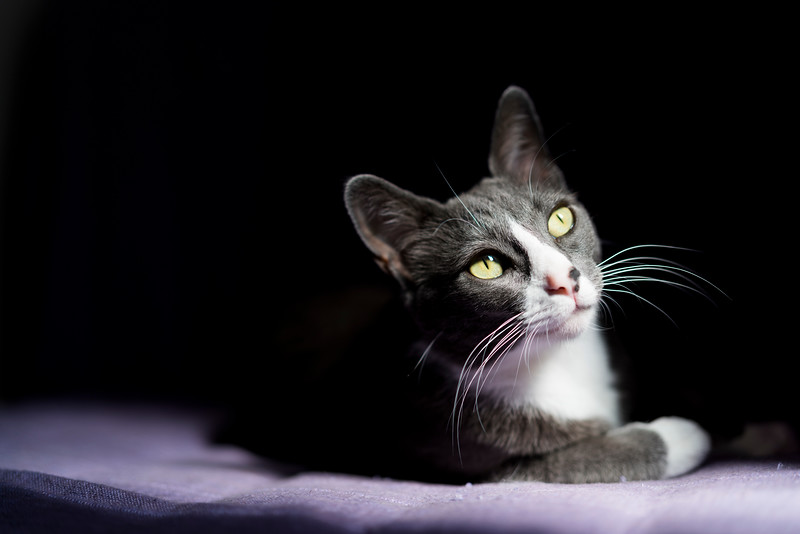 Kitty in chiaroscuro