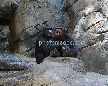 Monkey's on Rock