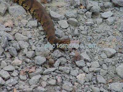 Snake laying on rocks
