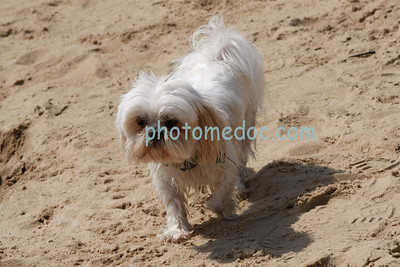 Little Dog Big Adventure