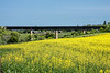 Canola Field and Railroad Bridge