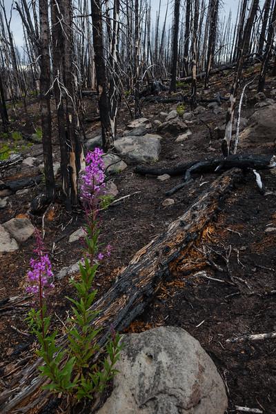 BC-2012-069: Tweedsmuir Provincial Park, Chilcotin, BC, Canada
