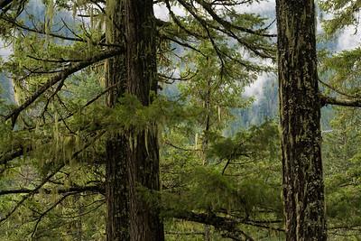 BC-2008-041: Pemberton, Sea to Sky Region, BC, Canada