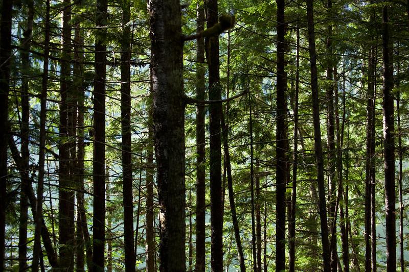 BC-2011-134: Mabel Lake, Thompson-Okanagan, BC, Canada