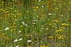 BC-2011-132: Mabel Lake, Thompson-Okanagan, BC, Canada