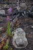 BC-2012-068: Tweedsmuir Provincial Park, Chilcotin, BC, Canada