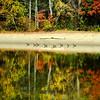 Springs Brook