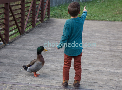 Little Boy and Duck Talking