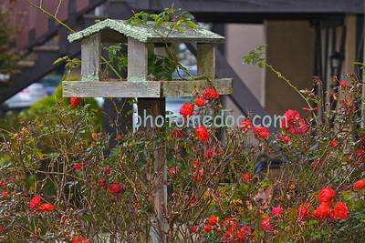 Switzerland Inn Rose Bush