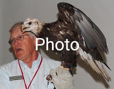 Buddy The Eagle