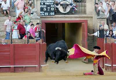 Charging bull against a kneeling bullfighter. Sequence of five images. Real Maestranza bullring, Seville, Spain