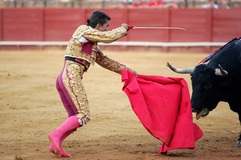 The Spanish bullfighter Anibal Ruiz stabbing a bull. Bullfight at Real Maestranza bullring, Seville, Spain, 15 August 2006.