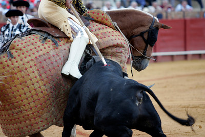 Bull lifting the picador's horse while being speared. Bullfight at Real Maestranza bullring, Seville, Spain, 15 August 2006.