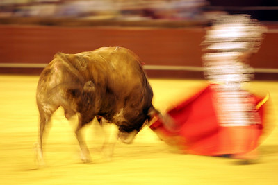 Motion blurred bullfight action. Bullfight at Real Maestranza bullring, Seville, Spain, 15 August 2006.