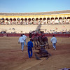 The mules (mulillas) dragging a bull carcass. Bullfight at Real Maestranza bullring, Seville, Spain, 15 August 2006.