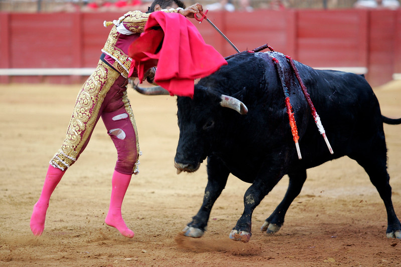 The Spanish bullfighter Anibal Ruiz stabbing a bull. Bullfight at Real Maestranza bullring, Seville, Spain, 15 August 2006.