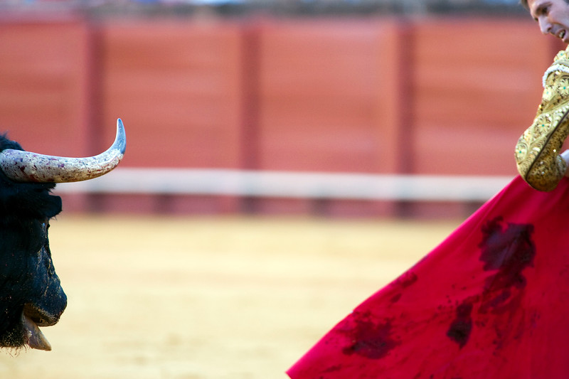 The Spanish bullfighter Luis de Pauloba, Real Maestranza bullring, Seville, autonomous community of Andalusia, southern Spain