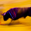 Bullfight action at slow shutter speed, Real Maestranza bullring, Seville, autonomous community of Andalusia, southern Spain