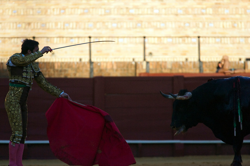 Bullfighter about to stab the bull, Real Maestranza bullring, Seville, autonomous community of Andalusia, southern Spain