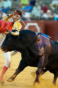 The Spanish bullfighter Cesar Giron stabbing a bull, Real Maestranza bullring, Seville, autonomous community of Andalusia, southern Spain