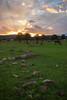 CHH-2013-065: Ejido Colonia Pacheco, Mpo. Casas Grandes, CHH, Mexico