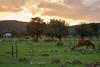 CHH-2013-063: Ejido Colonia Pacheco, Mpo. Casas Grandes, CHH, Mexico