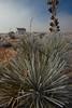 CHH-2013-019: San Jeronimo, Mpo. Juárez, CHH, Mexico