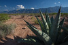 COA-2013-021: Sierra La Encantada, Mpo. Melchor Muzquiz, COA, Mexico