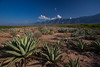 COA-2013-019: Sierra La Encantada, Mpo. Melchor Muzquiz, COA, Mexico