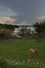 COA-2013-006: Presa San Miguel, Mpo. Jimenez, COA, Mexico