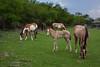 COA-2013-007: Presa San Miguel, Mpo. Jimenez, COA, Mexico