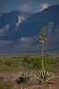 COA-2013-022: Sierra La Encantada, Mpo. Melchor Muzquiz, COA, Mexico