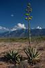 COA-2013-020: Sierra La Encantada, Mpo. Melchor Muzquiz, COA, Mexico